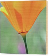 California Poppy Wood Print by Kathy Yates