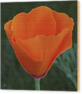 California Poppy Spectacular Wood Print
