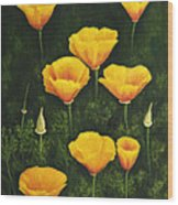 California Poppy Wood Print by Veikko Suikkanen