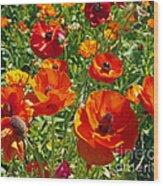 California Poppy's Wood Print