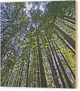 California Redwood Forest Wood Print by Brendan Reals