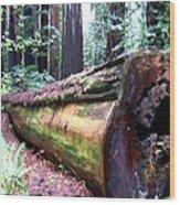 California Redwoods 2 Wood Print
