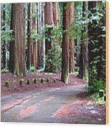 California Redwoods 3 Wood Print