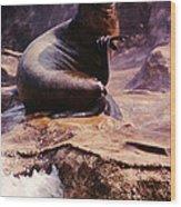 California Sea Lion Raising A Flipper Wood Print