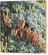 California Seaside Garden Wood Print