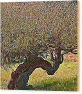 California Summer Oak Wood Print