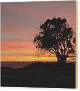California Tree At Sunset Wood Print