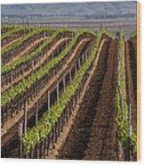 California Vineyard Wood Print