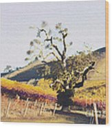 California Vineyard Series Oaks In The Vineyard Wood Print