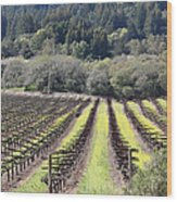 California Vineyards In Late Winter Just Before The Bloom 5d22051 Wood Print