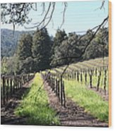 California Vineyards In Late Winter Just Before The Bloom 5d22053 Wood Print