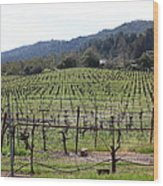 California Vineyards In Late Winter Just Before The Bloom 5d22088 Wood Print