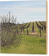 California Vineyards In Late Winter Just Before The Bloom 5d22121 Wood Print