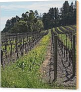 California Vineyards In Late Winter Just Before The Bloom 5d22166 Wood Print
