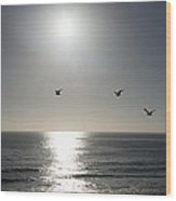 California Seagulls Where Are They Headed Wood Print