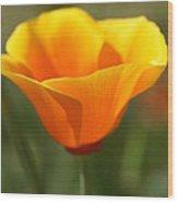 Californian Poppy Wood Print