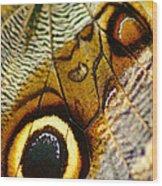 Caligo Atreus Wood Print