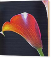 Calla Colors And Curves Wood Print by Rona Black