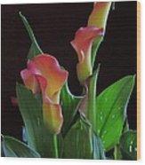 Calla Lilies 2  Wood Print