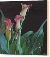 Calla Lilies 3 Wood Print