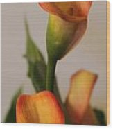 Calla Lilies Wood Print by Cathy Lindsey