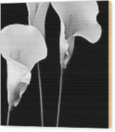 Calla Lilies In Triplicate In Black And White Wood Print