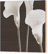 Calla Lilies In Triplicate In Sepia Wood Print