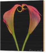 Calla Lillies Kissing Wood Print
