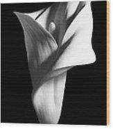 Calla Lily - 05 Wood Print