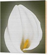 Calla Lily Flower Glow Wood Print