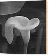 Calla Lily In Black And White Wood Print