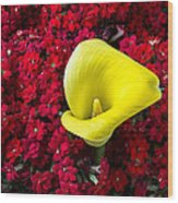 Calla Lily In Red Kalanchoe Wood Print
