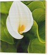 Calla Lily Plant Wood Print