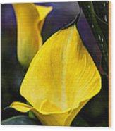 Calla Lily Portrait In Yellow And Green Wood Print