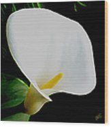Calla Lily Spectacular Wood Print