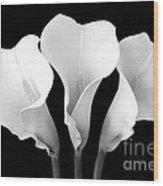 Calla Lily Trio In Black And White Wood Print