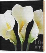 Calla Lily Trio Wood Print