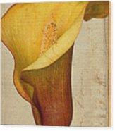 Calla Lily Vintage  Wood Print by Heidi Smith
