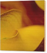 Calla Lily Waves Wood Print