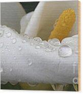 Calla Lily With Raindrops Wood Print