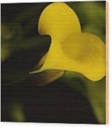 Calla Lily Yellow IIi Wood Print by Ron White
