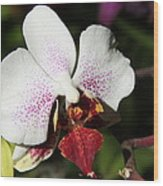 Callaway Gardens Orchid Wood Print