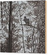 Callaway Great Horned Owl Wood Print