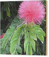 Calliandra Blossom Wood Print