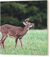 Calling Buck Wood Print