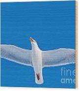 Calling Herring Gull Flying In Blue Sky Wood Print
