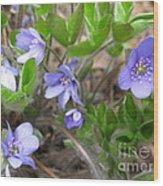 Calling Spring Wood Print