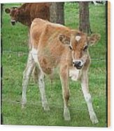 Calves Wood Print