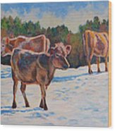 Calves In Snow Wood Print