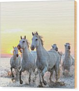Camargue White Horses Running In Water Wood Print